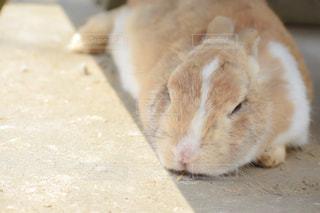 地面に横たわる猫のクローズアップの写真・画像素材[2281544]