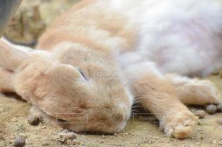 地面に横たわる猫の写真・画像素材[2281545]