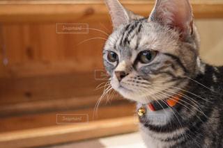 カメラを見ている猫の写真・画像素材[2293056]