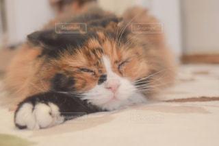 白い表面に横たわる猫のクローズアップの写真・画像素材[2293057]