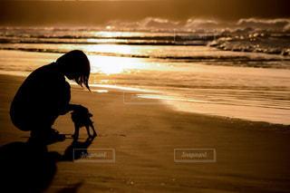 浜辺を歩く犬の写真・画像素材[2329732]