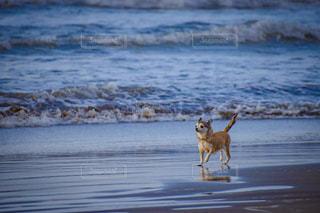 浜辺を歩く犬の写真・画像素材[2329735]