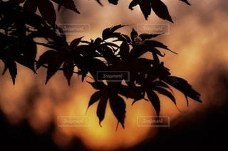 自然の写真・画像素材[2575807]