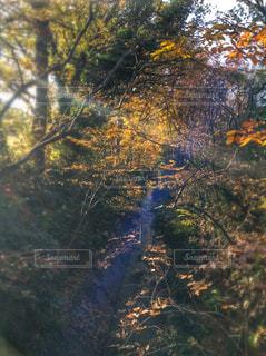 秋の写真・画像素材[244537]