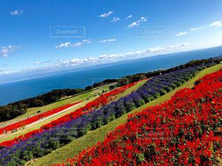 カラフル畑の写真・画像素材[2011698]