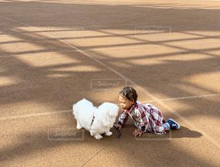 家族,犬,公園,動物,ペキニーズ,屋外,散歩,女の子,ペット,外,赤ちゃん,グラウンド,わんちゃん,ワンちゃん