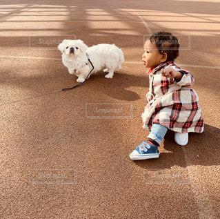 家族,犬,公園,ペキニーズ,屋外,散歩,女の子,ペット,休憩,外,赤ちゃん,わんちゃん,ワンちゃん,真っ白