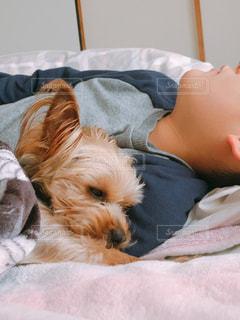 犬,動物,かわいい,いぬ,男の子,ヨークシャーテリア,わんちゃん