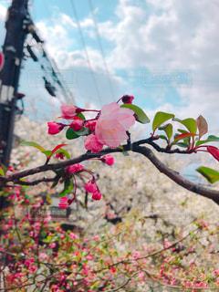 花の写真・画像素材[2144672]