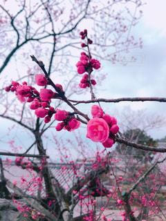 花の写真・画像素材[2144674]