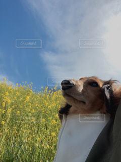 犬,自然,風景,空,花,春,動物,雲,丘,道,高原,私,フラワーフォト