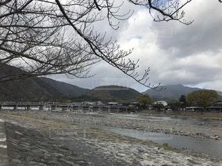 地面の雪の木の写真・画像素材[907145]