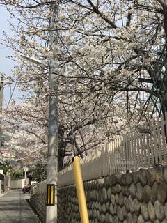 クローズド,神戸,岡本桜守公園