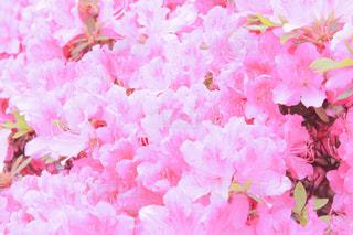 花の写真・画像素材[2007667]