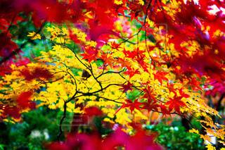 木の上に多くのカラフルな花の写真・画像素材[3815811]