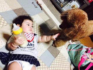 犬,動物,赤ちゃん,芸