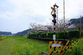 空,花,春,桜,屋外,駅,草,樹木,鉄道,明るい,踏切,ローカル線,ライフスタイル,草木
