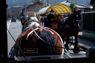 動物,屋外,観光,リラックス,旅行,馬,馬車,ノスタルジック,ライフスタイル