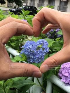 風景,花,屋外,あじさい,手,草,ハート,ハートマーク,草木,ガーデン,ハンドハート