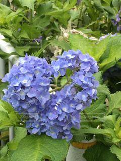 花のクローズアップの写真・画像素材[2278716]
