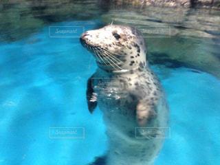 水のプールで泳ぐの写真・画像素材[2281248]