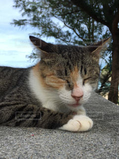 地面に横たわる猫の写真・画像素材[2291610]