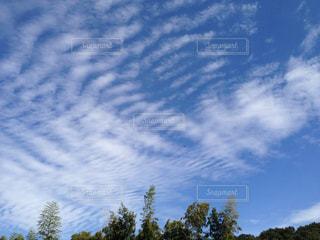 木のクローズアップの写真・画像素材[2422196]