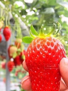 果物を持つ手の写真・画像素材[3861502]