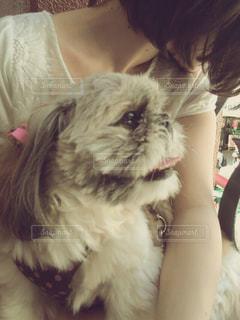 犬,夏,動物,屋外,ペット,癒し,眩しい,笑顔,ショートヘア,可愛い,ボブ,シーズー,愛犬,お散歩,わんちゃん,鼻ぺちゃ,フワフワ
