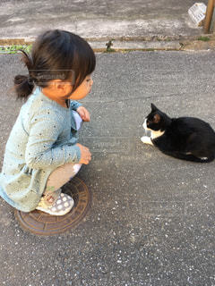 猫の写真・画像素材[2076808]