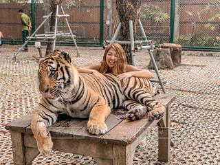 海外,旅行,写真,プーケット,ベージュ,トラ,ハイライト,虎,Travel,photo,Phuket,トラヘアー