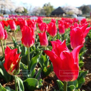 花の写真・画像素材[1964982]