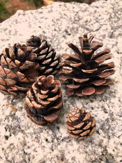 自然,屋外,茶色,木の実,松ぼっくり,ミルクティー色