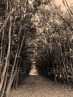 自然,木,屋外,森,茶色,林,木立,ベージュ,セピア,草木,ミルクティー色