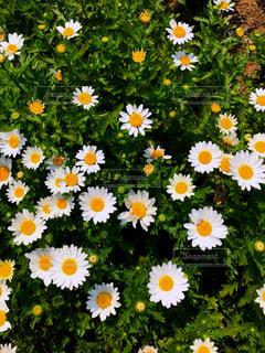 花の写真・画像素材[2049636]