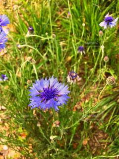 花の写真・画像素材[2058019]