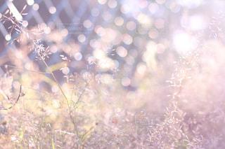 陽だまりの朝の写真・画像素材[1972958]
