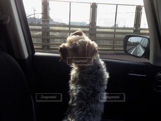 犬の写真・画像素材[2053348]