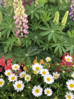 春満開の写真・画像素材[1978899]