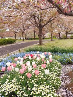 ピンクの花たちの写真・画像素材[2025471]