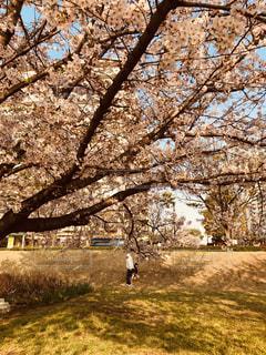 春の休日の写真・画像素材[2074247]