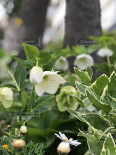 花のクローズアップの写真・画像素材[2097428]