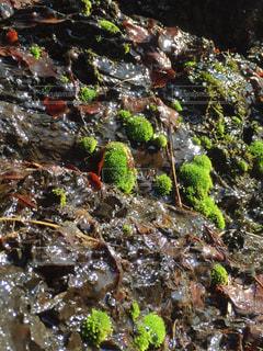 自然,緑,鮮やか,岩,草木