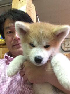 家族,可愛い,仔犬,秋田犬