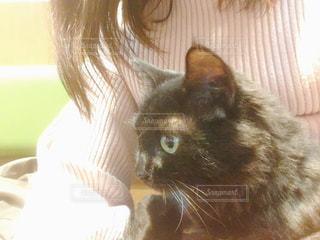 女性,猫,動物,ペット,人物,抱っこ,膝の上,ネコ