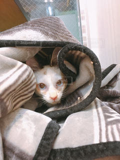 猫,動物,ペット,子猫,人物,恥ずかしい,ネコ,照れ屋,人見知り