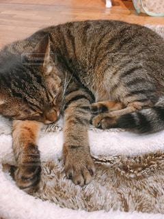 猫,動物,寝転ぶ,ペット,寝る,子猫,人物,ネコ