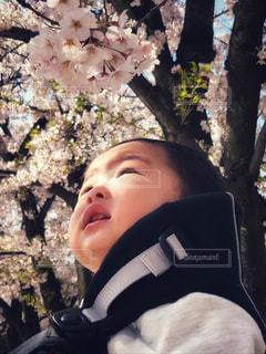 見上げれば、春の写真・画像素材[1987749]