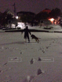 雪夜の散歩の写真・画像素材[2006317]