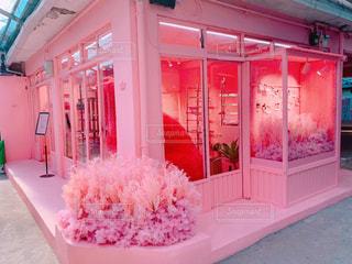 赤い白とピンクの花の写真・画像素材[2259607]